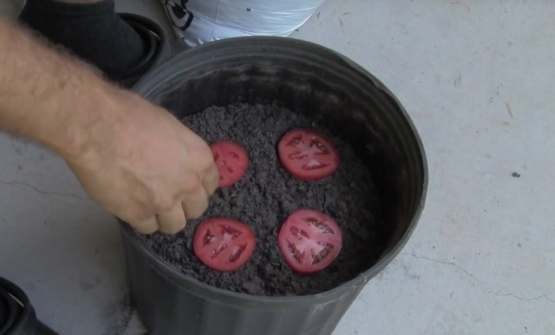 Tomaten planzen legen